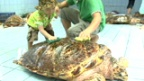 [Eco Activity] Sea Turtle Conservation Activities to Protect Biodiversity [Panasonic]